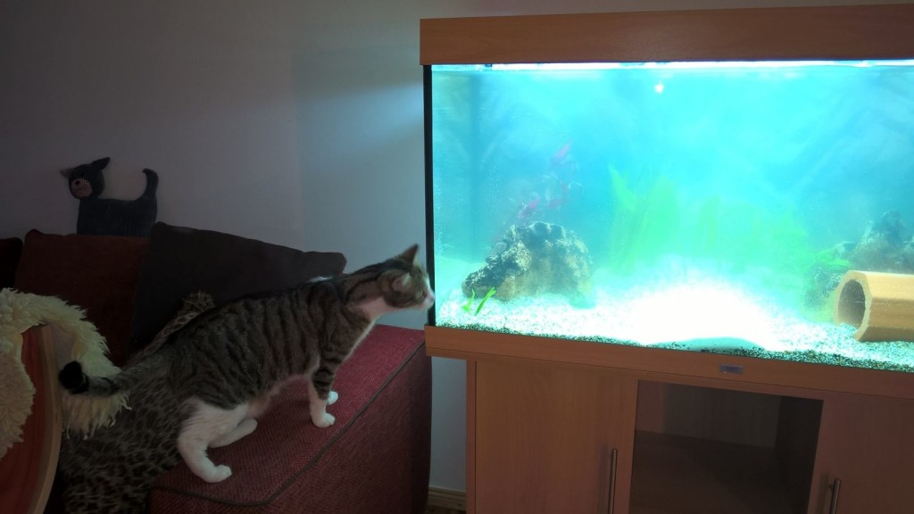 Ossi-Oscar bewundert das neue Aquarium